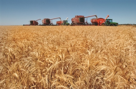 Wheat | AgriFutures Australia