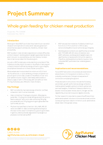 Whole grain feeding for chicken meat production - image