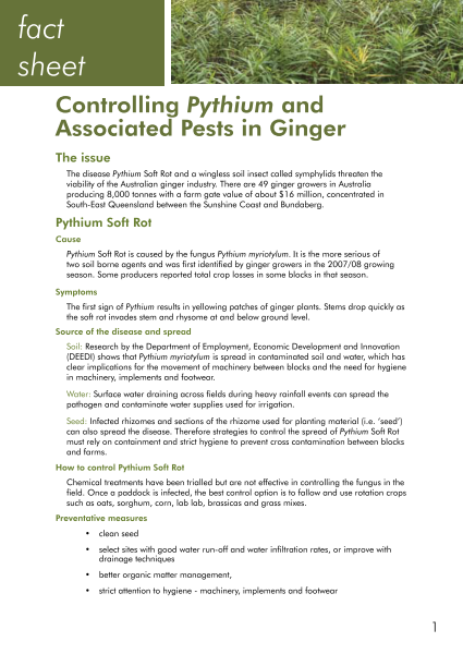 Controlling Pythium and Associated Pests in Ginger fact sheet - image