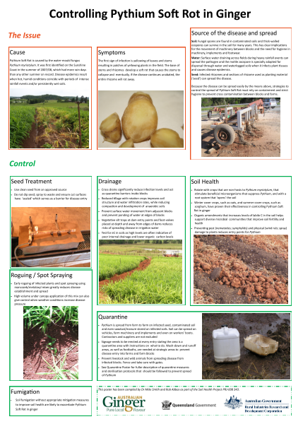 Controlling Pythium Soft Rot in Ginger -poster - image