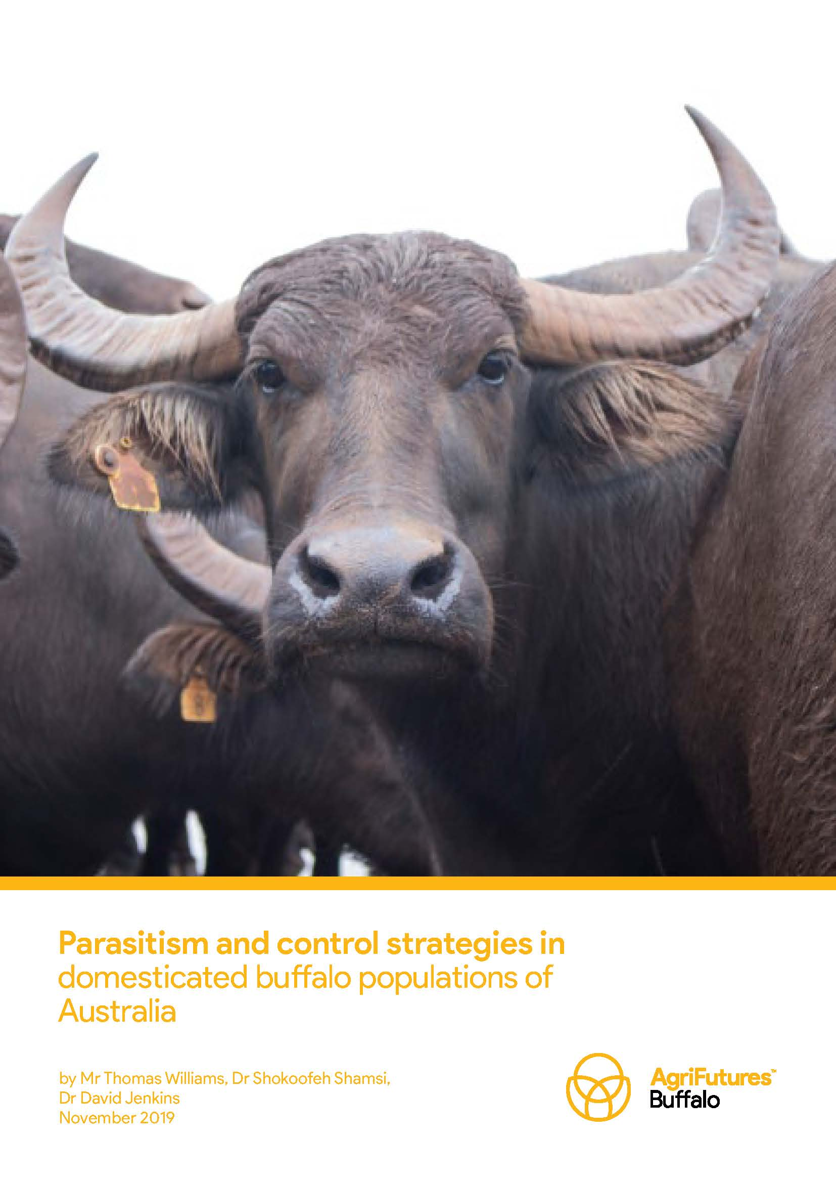 Parasitism and control strategies in domesticated buffalo populations of Australia - image
