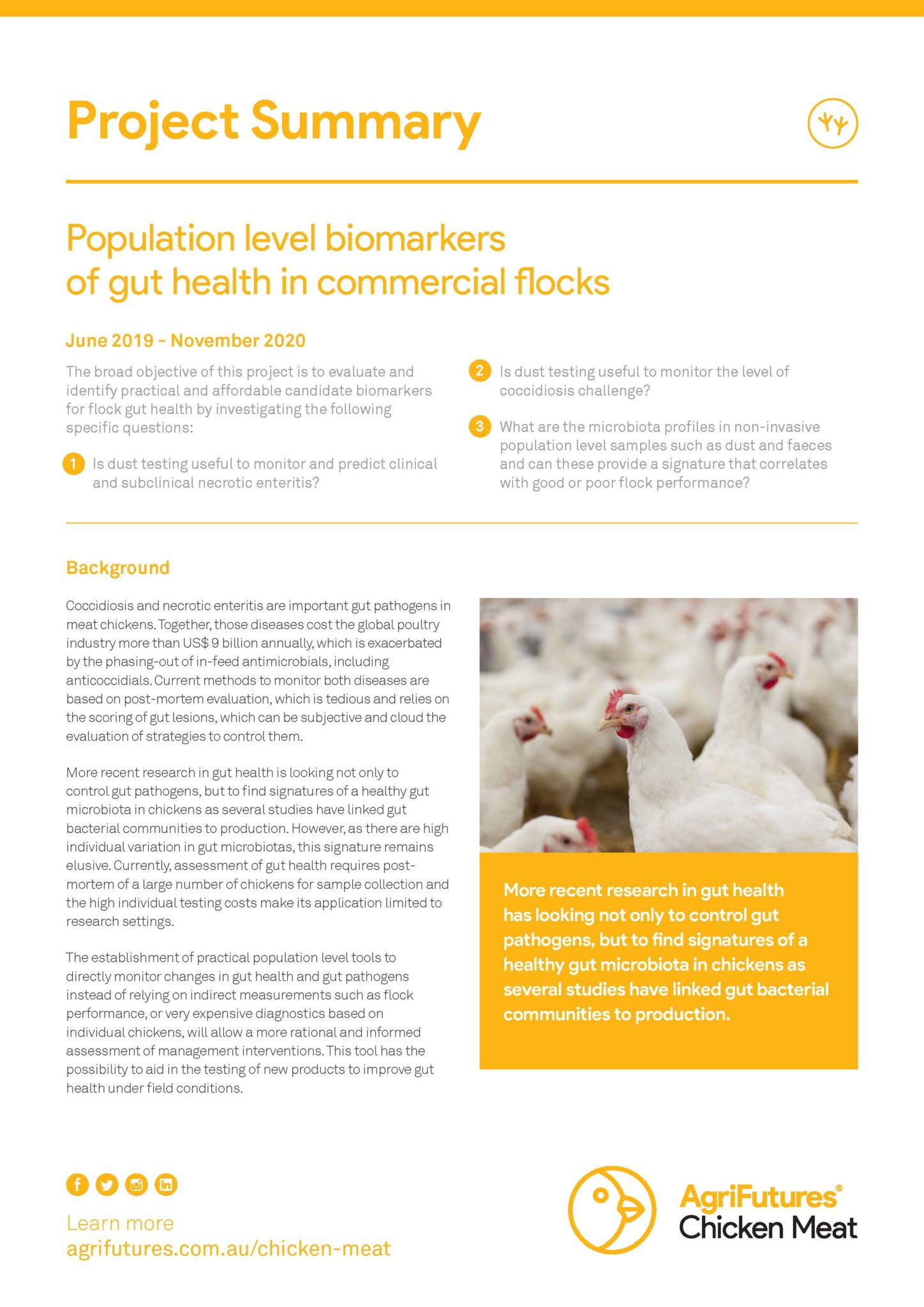 Project Summary: Population level biomarkers of gut health in commercial flocks - image