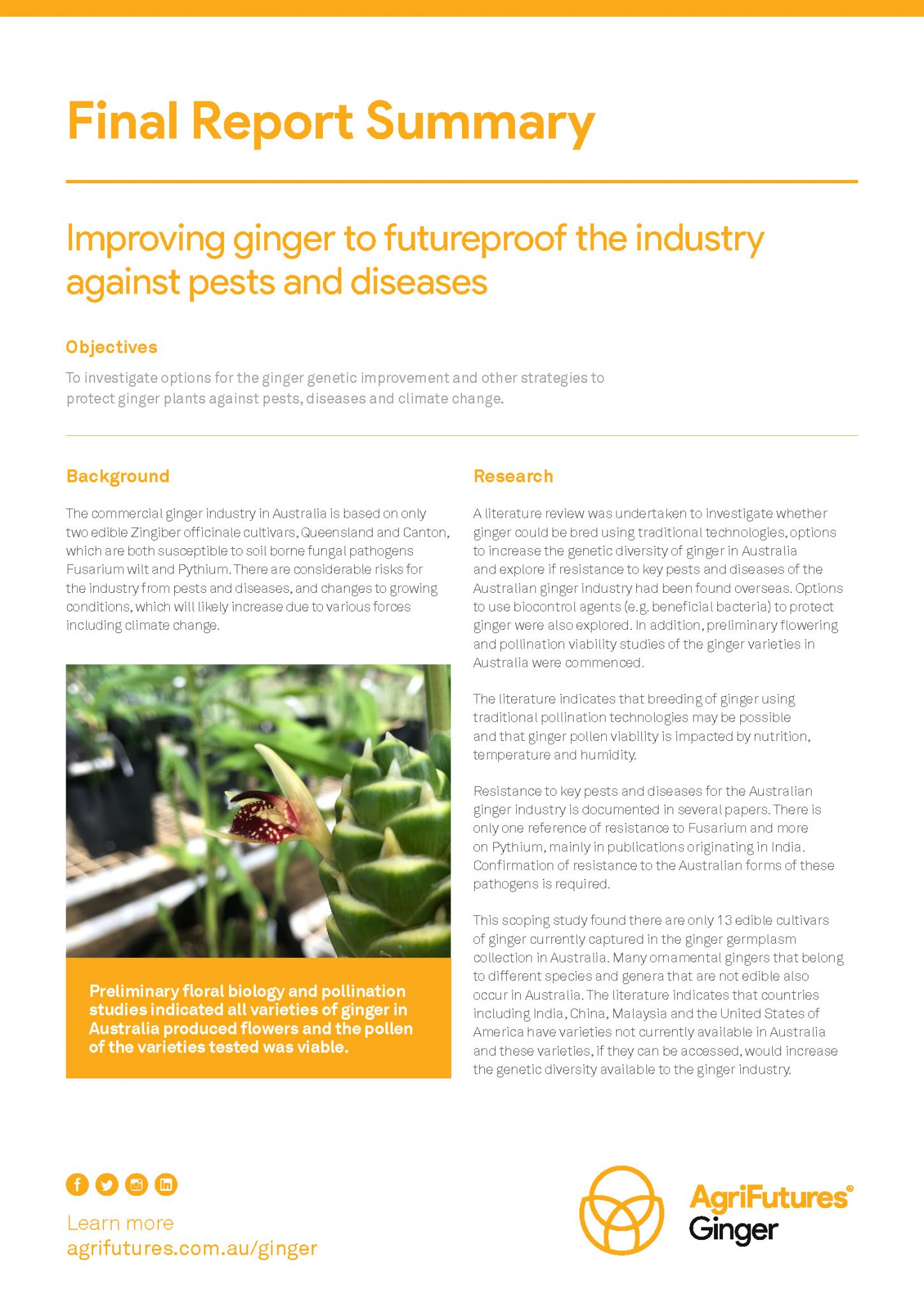 Final Report Summary: Improving ginger to futureproof the industry against pests and diseases - image