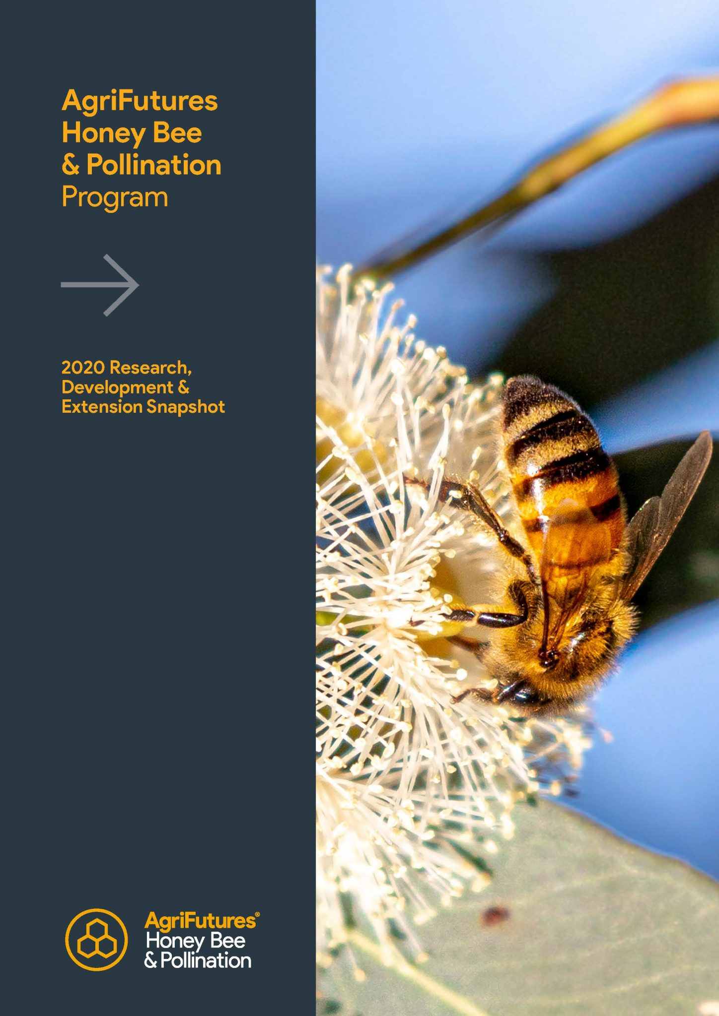 AgriFutures Honey Bee & Pollination Program: 2020 Research,  Development &  Extension Snapshot - image