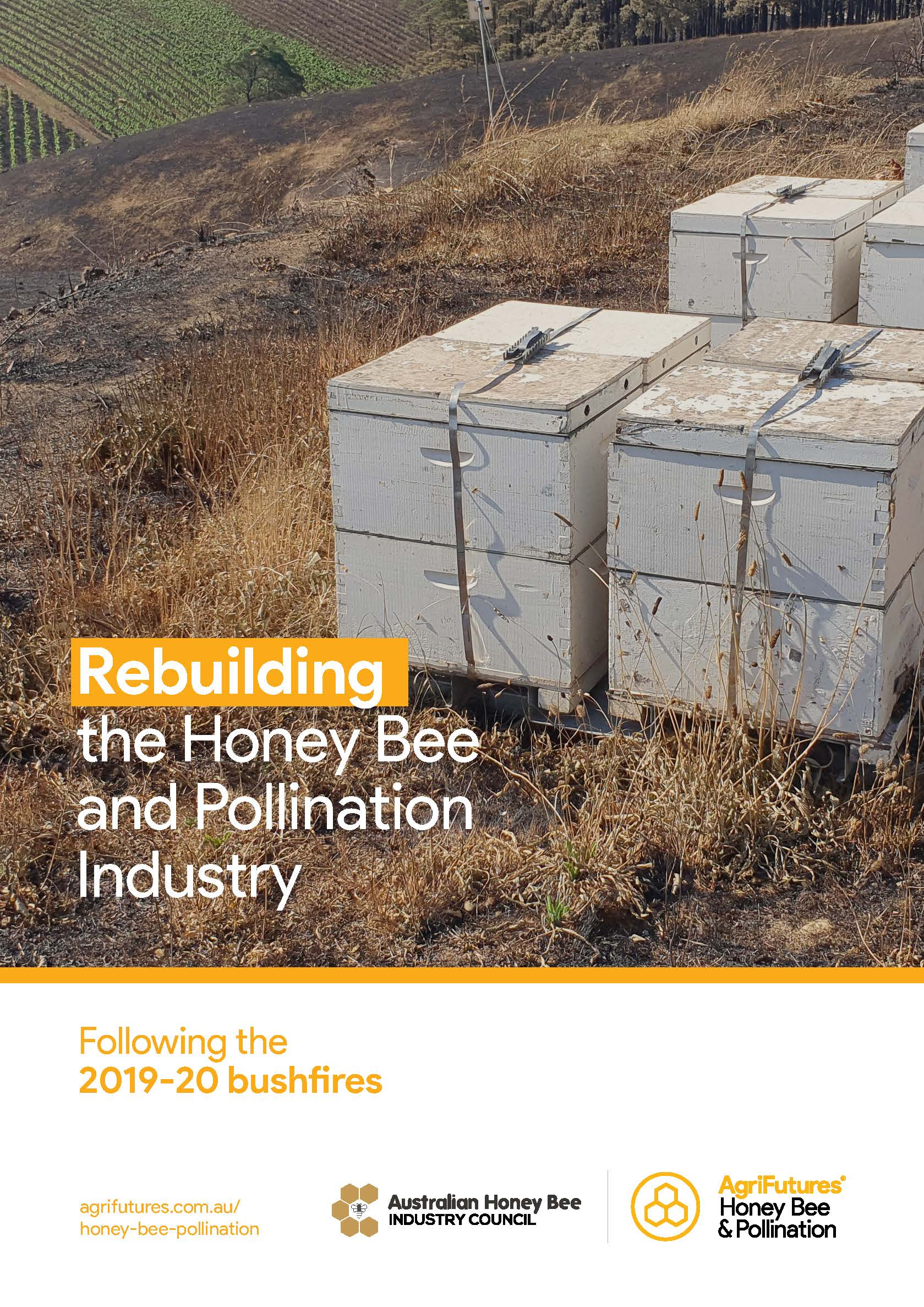 Rebuilding the Honey Bee and Pollination Industry - image