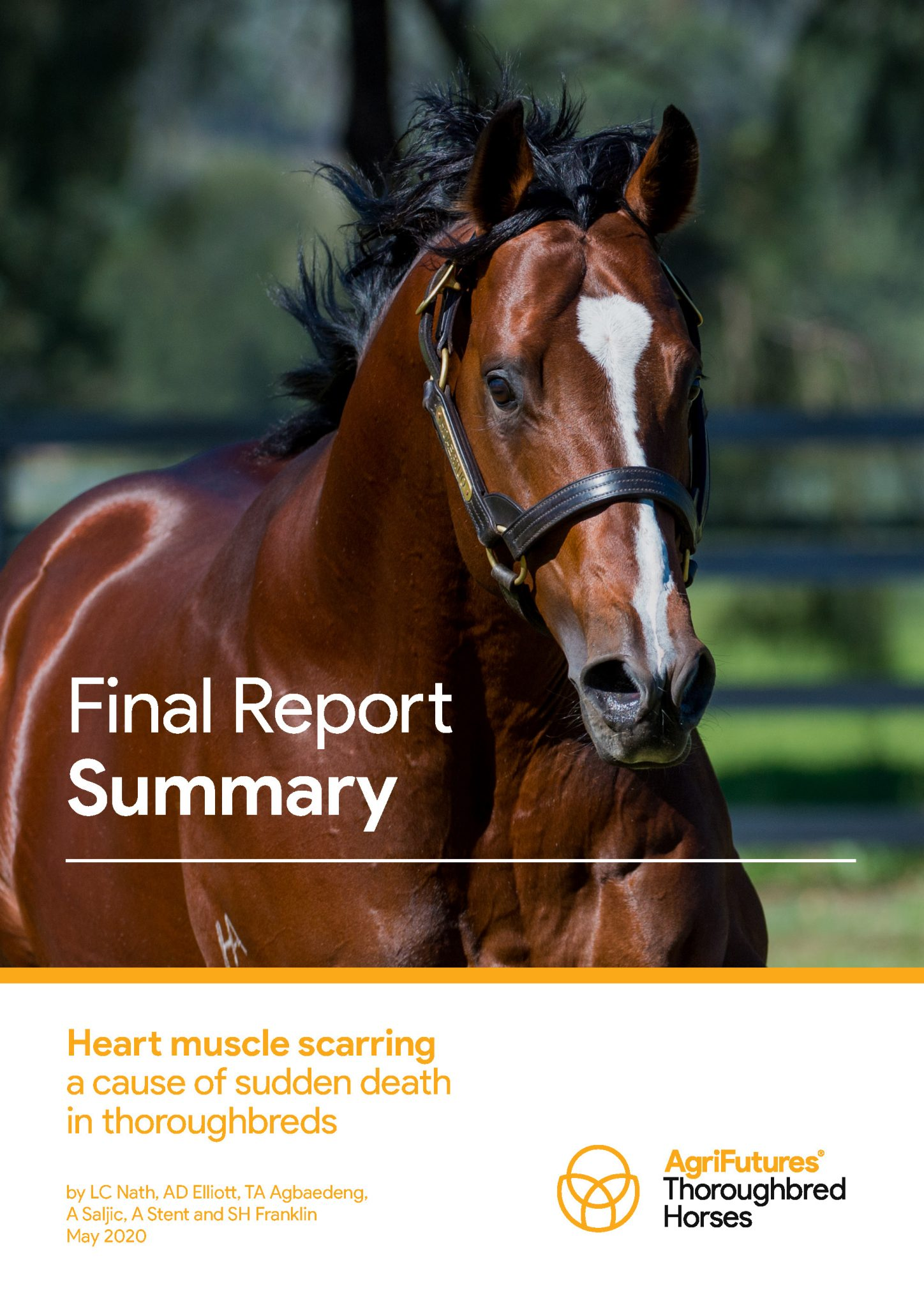 Final report summary: Heart muscle scarring a cause of sudden death in thoroughbreds - image