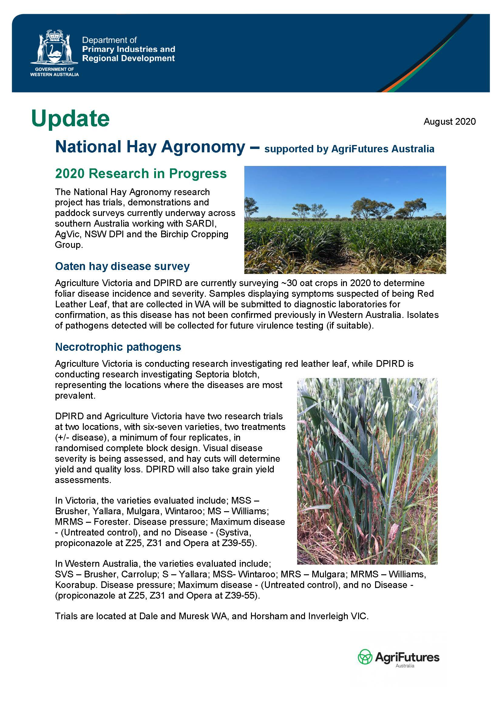 National Hay Agronomy: August 2020 Research in Progress - image