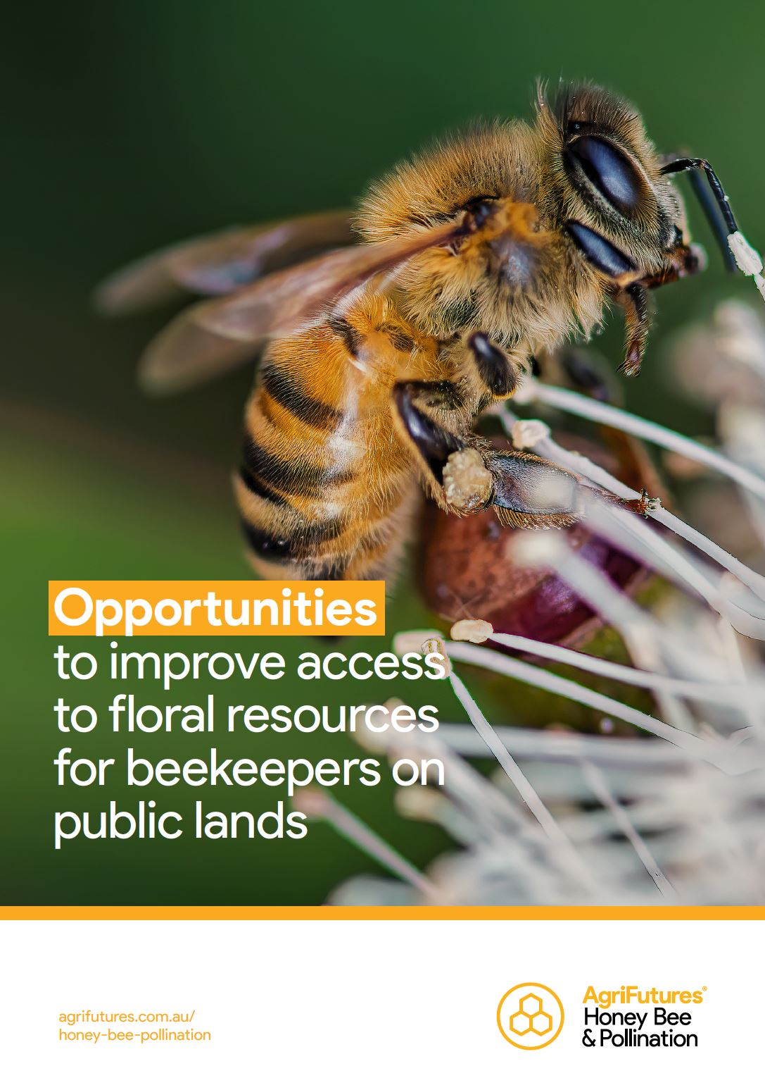 Opportunities to improve access to floral resources for beekeepers on public lands - image