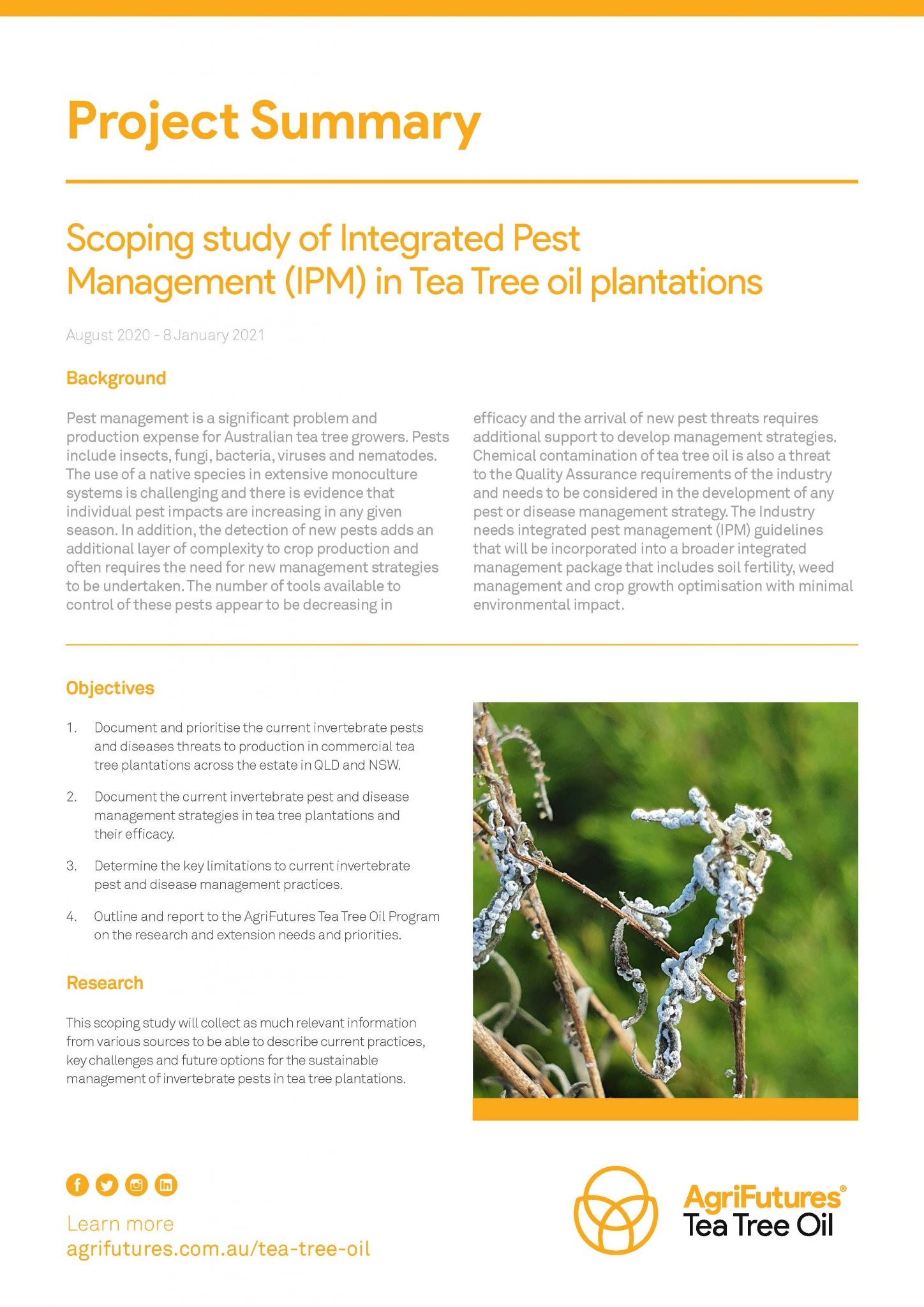 Project Summary: Scoping study of Integrated Pest Management (IPM) in tea tree oil plantations - image