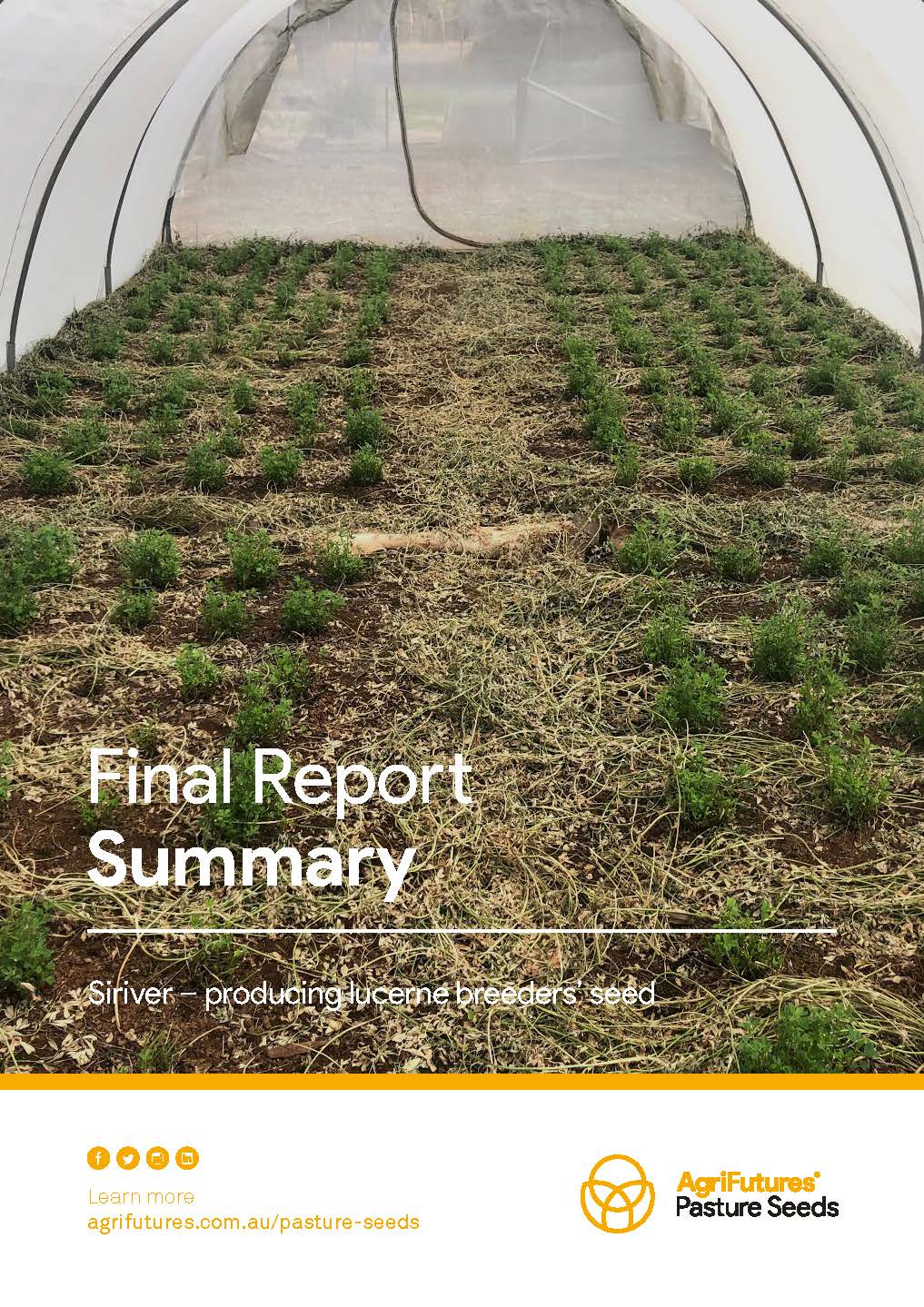 Final report summary: Siriver - Producing lucerne breeders' seed - image