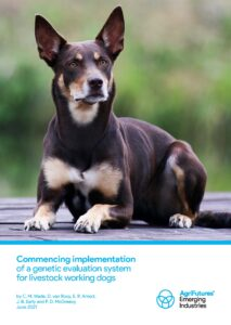 Final report: Commencing implementation of a genetic evaluation system for livestock working dogs - image