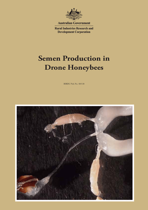 Semen Production in Drone Honeybees - image