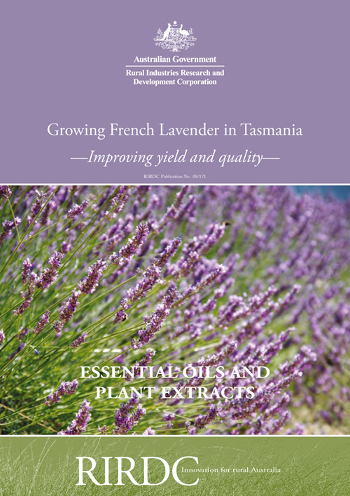 Growing French Lavender in Tasmania- Improving Yield and Quality - image