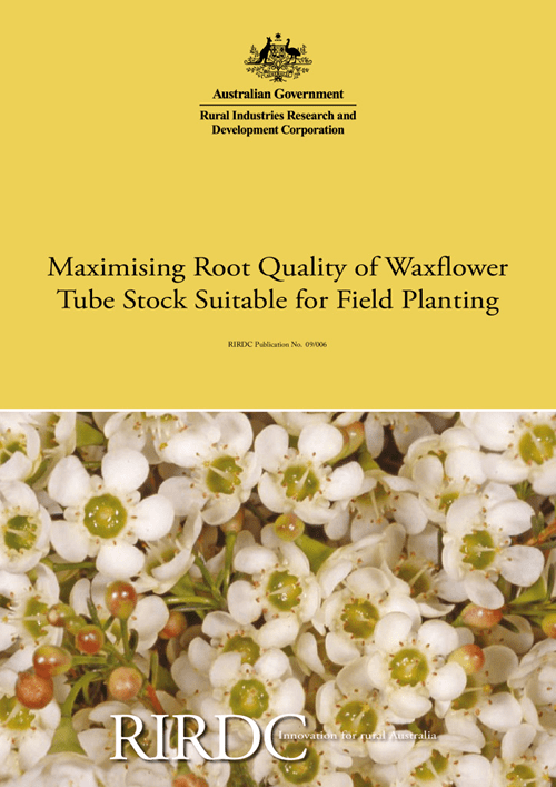 Maximising root quality of waxflower tube stock suitable for field planting - image