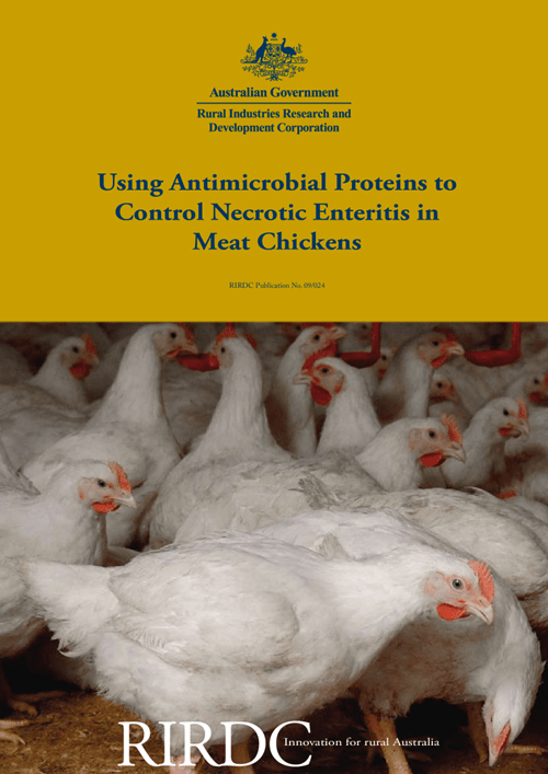 Using Antimicrobial Proteins to Control Necrotic Enteritis in Meat chickens - image