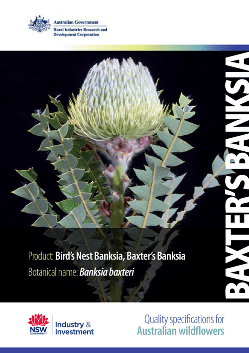 Quality Specifications for Bird's Nest Banksia - image