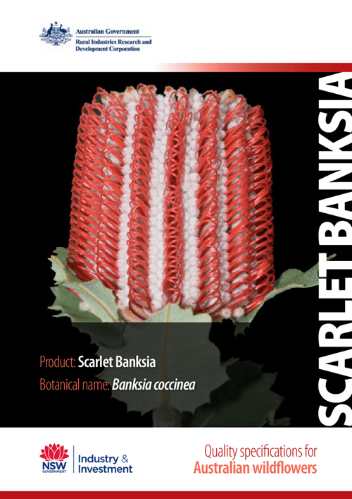 Quality Specifications for Scarlet Banksia - image