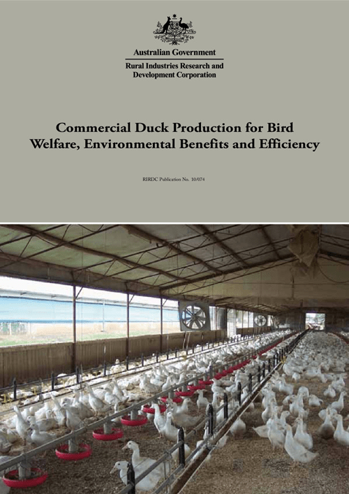 Commercial Duck Production for Bird Welfare, Environmental Benefits and Efficiency - image