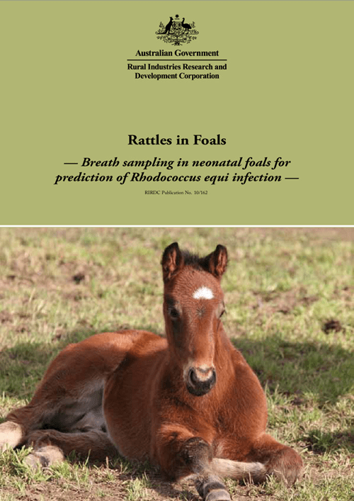 Rattles in Foals: Breath sampling in neonatal foals for prediction of Rhodococcus equi infection - image