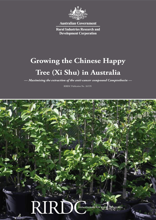 Growing the Chinese Happy Tree (Xi Shu) in Australia - image