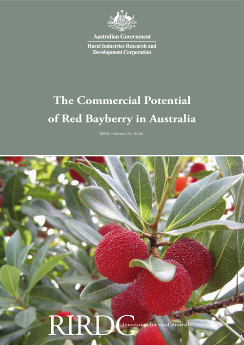 The Commercial Potential of Red Bayberry in Australia - image