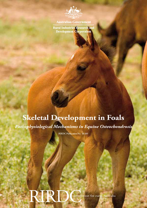 Skeletal Development in Foals: Pathophysiological Mechanisms in Equine Osteochondrosis - image