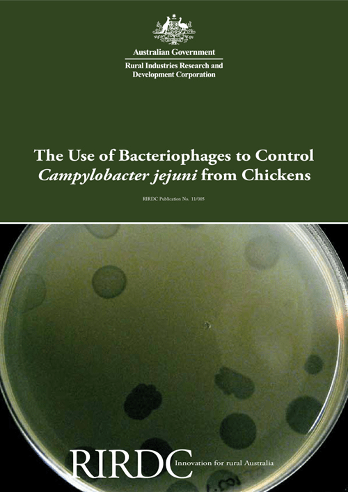 The Use of Bacteriophages to Control Campylobacter jejuni from Chickens - image