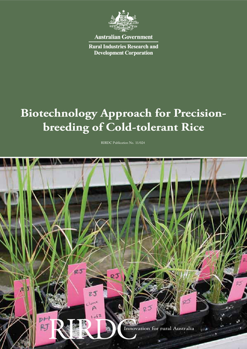 Biotechnology Approach for Precision-breeding of Cold-tolerant Rice - image