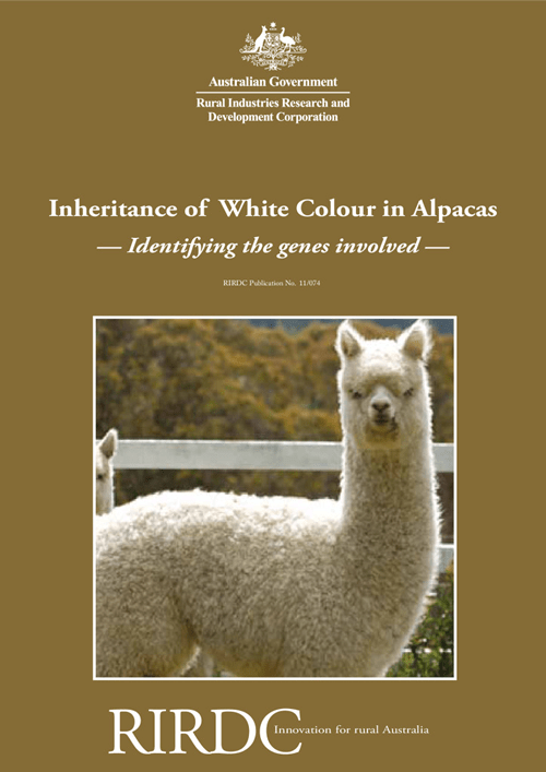 Inheritance of White Colour in Alpacas: Identifying the genes involved - image