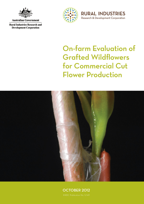 On-farm Evaluation of Grafted Wildflowers for Commercial Cut Flower Production - image