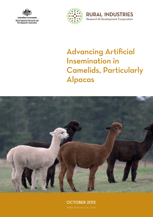 Advancing Artificial Insemination in Camelids, Particularly Alpacas - image