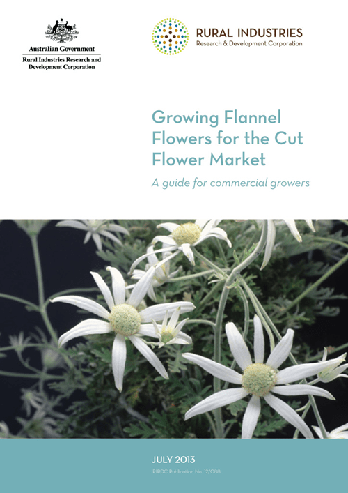 Growing Flannel Flowers for the Cut Flower Market - image