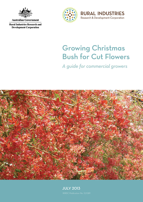 Growing Christmas Bush for Cut Flowers - image