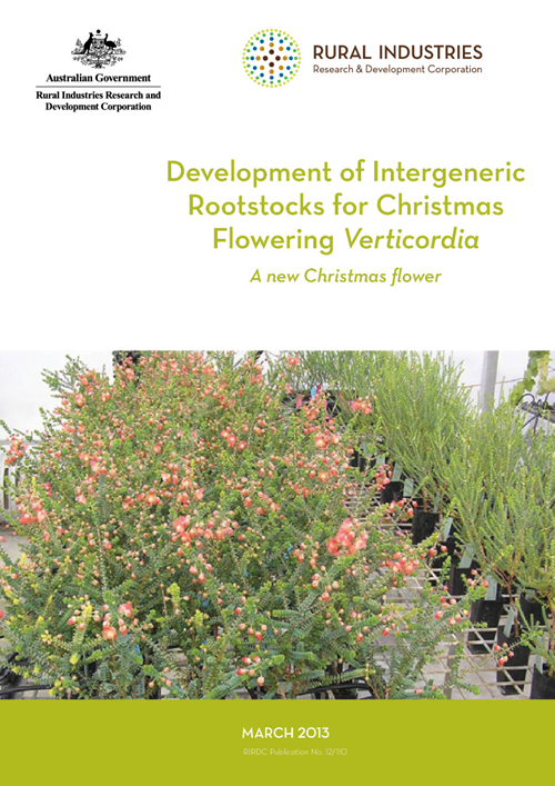 Development of Intergeneric Rootstocks for Christmas Flowering Verticordia – A new Christmas flower - image