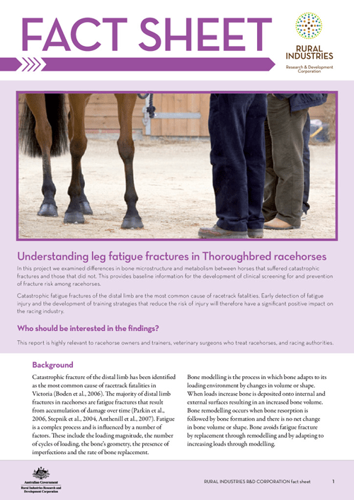 Understanding Leg Fatigue Fractures in Thoroughbred Horses - fact sheet - image