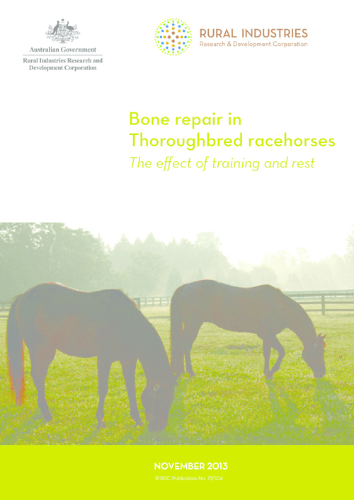Bone repair in Thoroughbred racehorses –The effect of training and rest - image