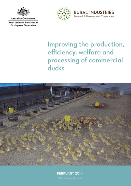 Improving the production, efficiency, welfare and processing of commercial ducks - image