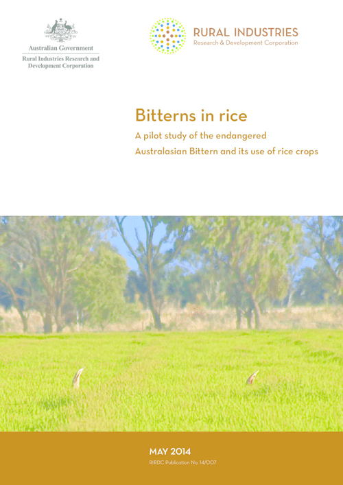 Bitterns in rice -A pilot study of the endangered Australasian Bittern (Botaurus poiciloptilus) and its use of rice crops - image