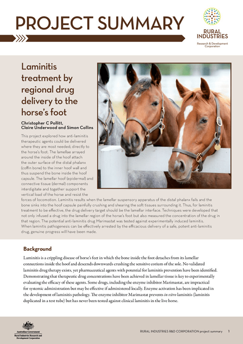 Laminitis treatment by regional drug delivery to the horse's foot - image