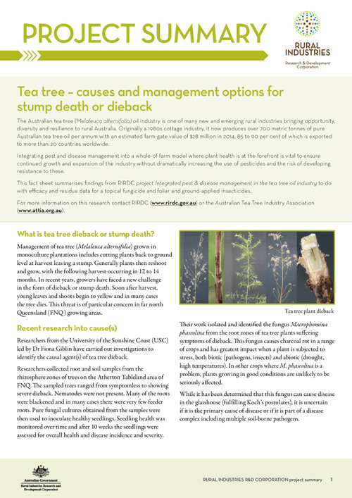 Tea tree – causes and management options for stump death or dieback project summary - image