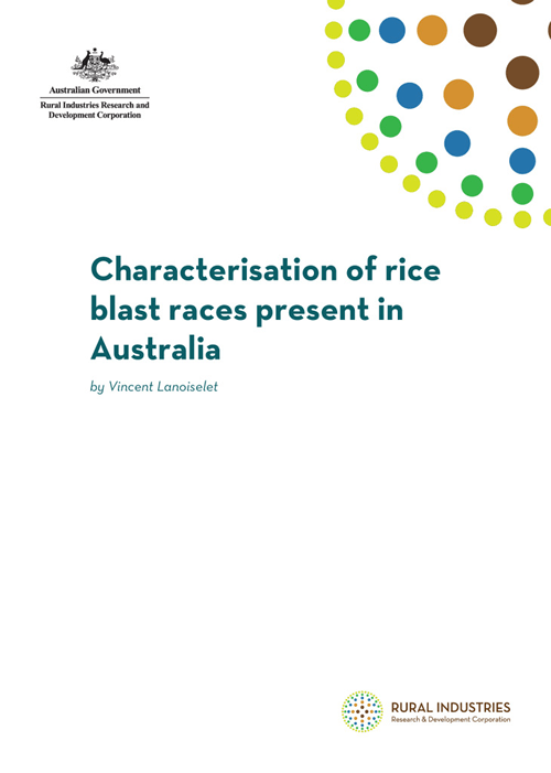 Characterisation of rice blast races present in Australia - image