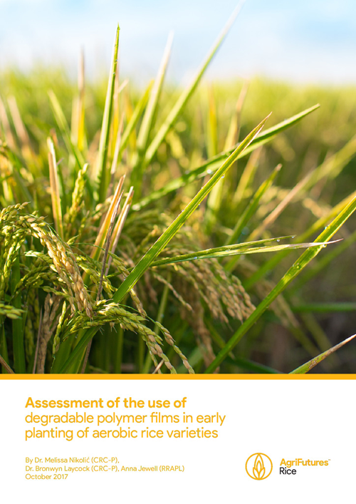Assessment of the use of degradable polymer films in early planting of aerobic rice varieties - image